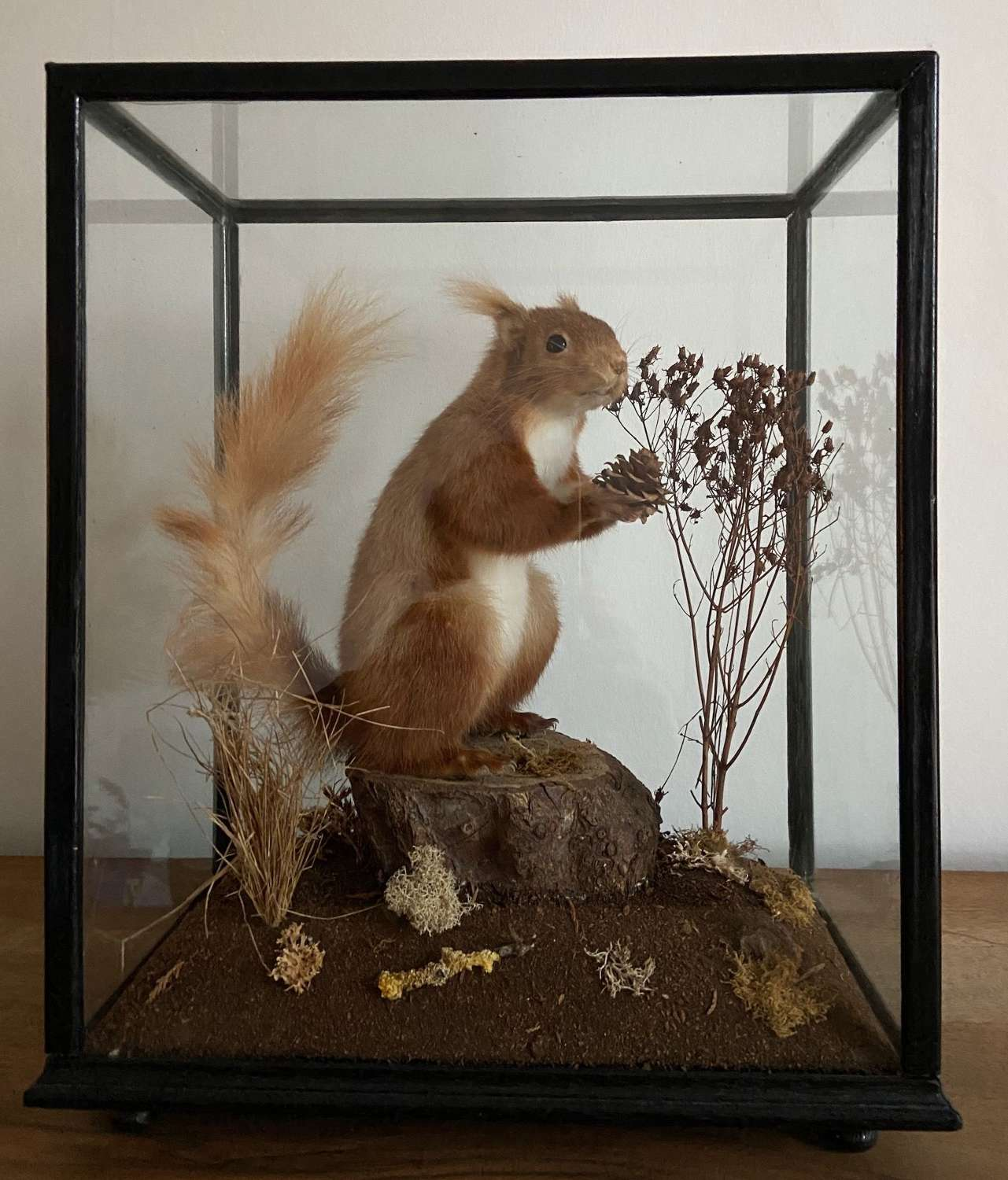 A Victorian red squirrel